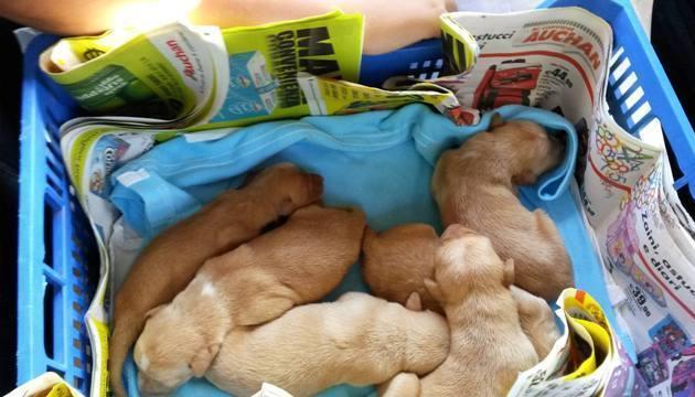 cuccioli-salvati-alle-vigne-3