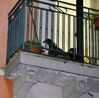 falco in via Umberto