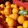 Da Biancavilla al Centro Italia, tonnellate di arance per i terremotati