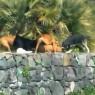 Attacco feroce del branco di cani: video shock in via della Montagna